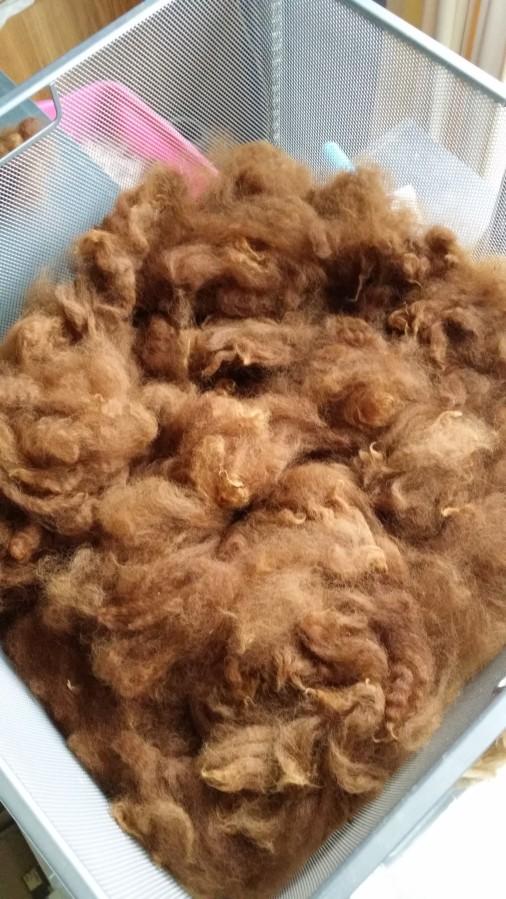 Shorn fibre